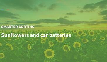 Sunflowers and Car Batteries